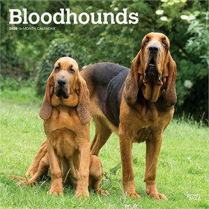 Bloodhounds Calendar 2015