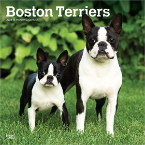 Boston Terriers Calendar 2014