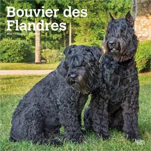 Bouvier des Flandres Calendar 2015