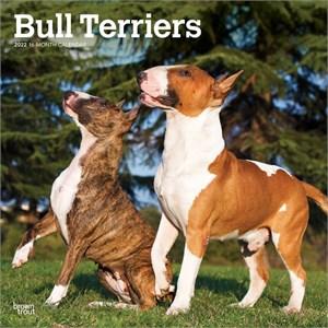 Bull Terriers Calendar 2015