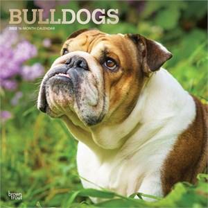 Bulldogs Calendar 2015