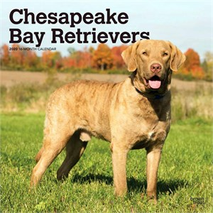 Chesapeake Bay Retrievers Calendar 2014