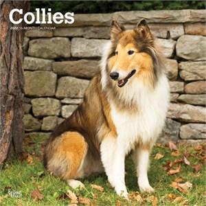 Collies Calendar 2015