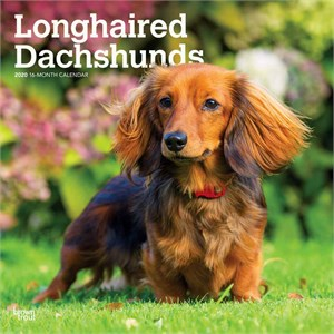 Longhaired Dachshunds Calendar 2015