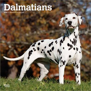Dalmatians Calendar 2015
