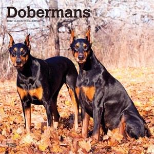 Dobermans Calendar 2015