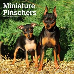 Miniature Pinschers Calendar 2015