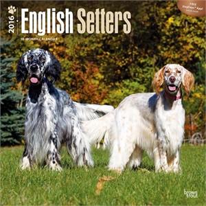 English Setters Calendar 2015