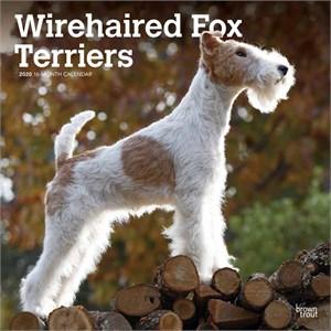 Wire Fox Terriers Calendar 2015