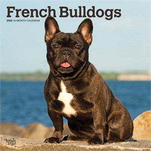 French Bulldogs Calendar 2015