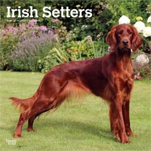 Irish Setters Calendar 2015