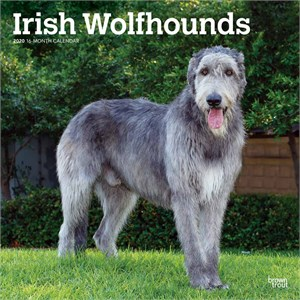Irish Wolfhounds Calendar 2015