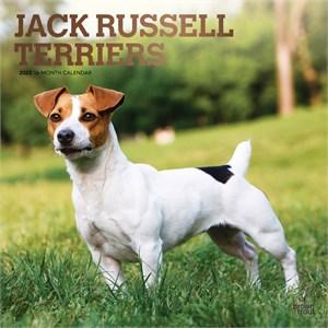 Jack Russell Terriers Calendar 2015