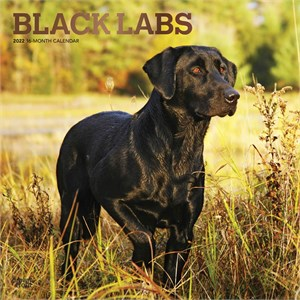 Black Labrador Retrievers Calendar 2014