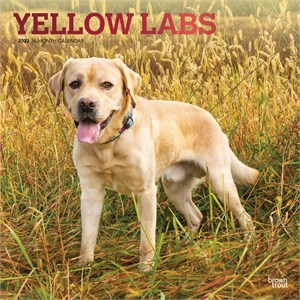 Yellow Labrador Retrievers Calendar 2014