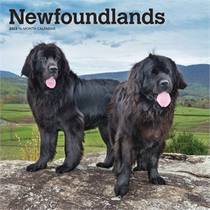 Newfoundlands Calendar 2015