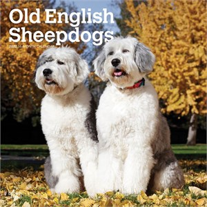 Old English Sheepdogs Calendar 2014
