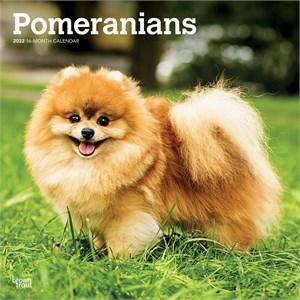 Pomeranians Calendar 2015