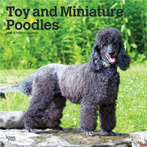Toy and Miniature Poodles Calendar 2014