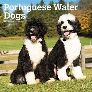Portuguese Water Dogs Calendar 2015
