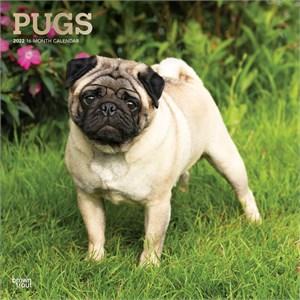 Pugs Calendar 2015