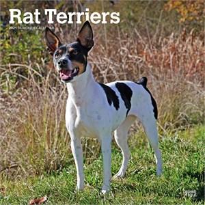 Rat Terriers Calendar 2015