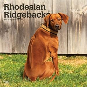Rhodesian Ridgebacks Calendar 2015