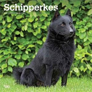 Schipperkes Calendar 2015