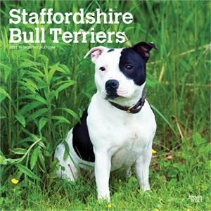 Staffordshire Bull Terriers Calendar 2015