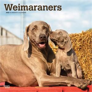 Weimaraners Calendar 2015