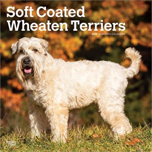 Soft Coated Wheaten Terriers Calendar 2014