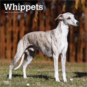 Whippets Calendar 2016