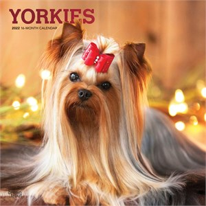 Yorkshire Terriers Calendar 2015