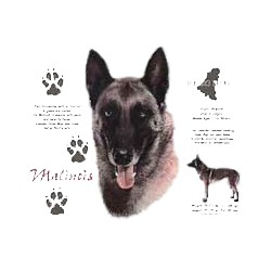 Belgian Malinois T-Shirt - History Collection
