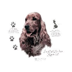 English Cocker Spaniel T-Shirt - History Collection
