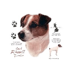 Smooth Hair Jack Russell T-Shirt - History Collection