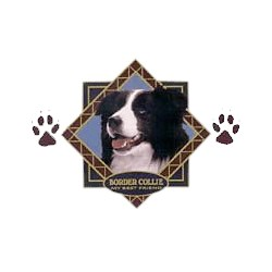 Border Collie T-Shirt - Diamond Collection