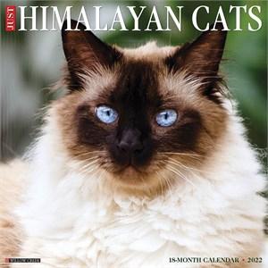Himalayan Cats Calendar 2015