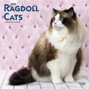 Ragdoll Cats Calendar 2015