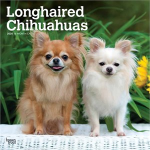 Longhaired Chihuahuas Calendar 2015