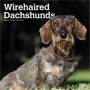 Wirehaired Dachshunds Calendar 2016