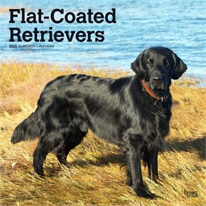 Flat-Coated Retrievers Calendar 2015