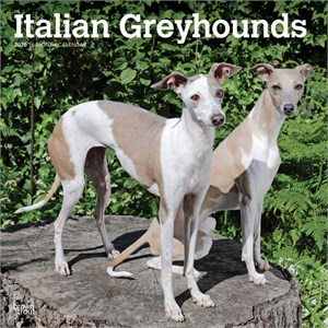 Italian Greyhounds Calendar 2015