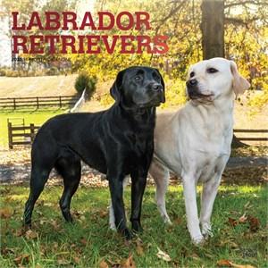 Labrador Retrievers Calendar 2015