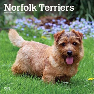 Norfolk Terriers Calendar 2014