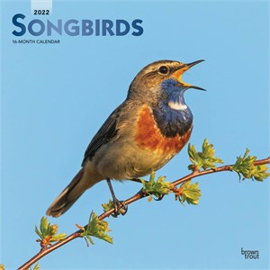 Songbirds Calendar 2015