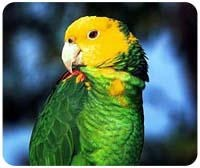 Parrot Mousepad