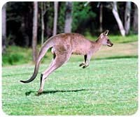 Kangaroo Mousepad