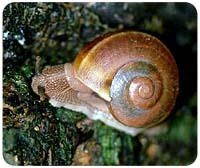 Snail Mousepad