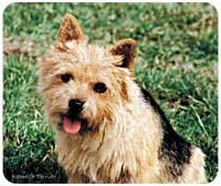 Norwich Terrier Mousepad